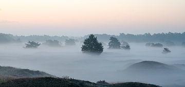 Mistig landschap van de Leuvenumse Bossen van