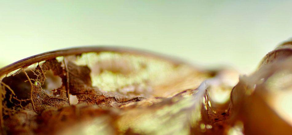 Herfstgolven van Marlies Prieckaerts