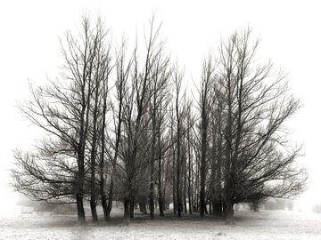 Weemoed - sfeervolle bomen van BHotography