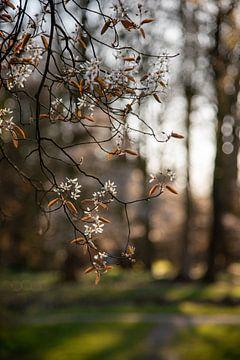 Lente in de tuin van Miranda Snoeijen