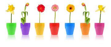 De fleurs Défilé sur Thomas Klee