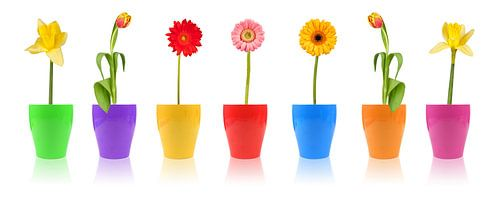 Bloemenparade van Thomas Klee