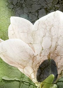 Magnolie mit Textur