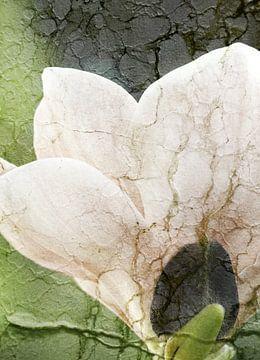 Magnolie mit Textur von Roswitha Lorz