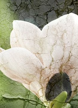 Magnolie mit Textur van Rosi Lorz