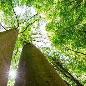 Saftig grüne Baumkronen van Oliver Henze