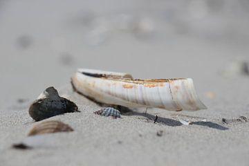 Shells on the beach van Lis Zandbergen