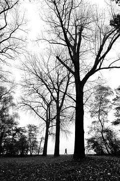 Hoge bomen von Bob Bleeker