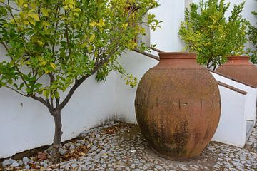 Kruiken en citrusboom Portugal van My Footprints