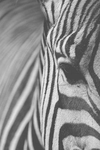 Zebra zwart-wit van Jeantina Lensen-Jansen