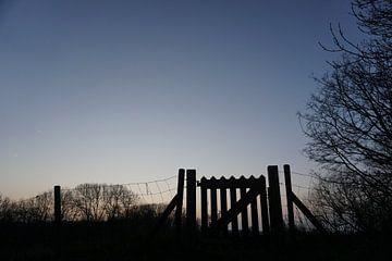 Hek bij zonsondergang von Koen van der Tuin
