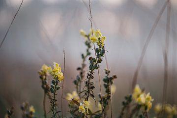 gelbe Blumen im Nebel von Tania Perneel