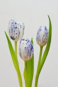 Delfts Blauwe Tulp