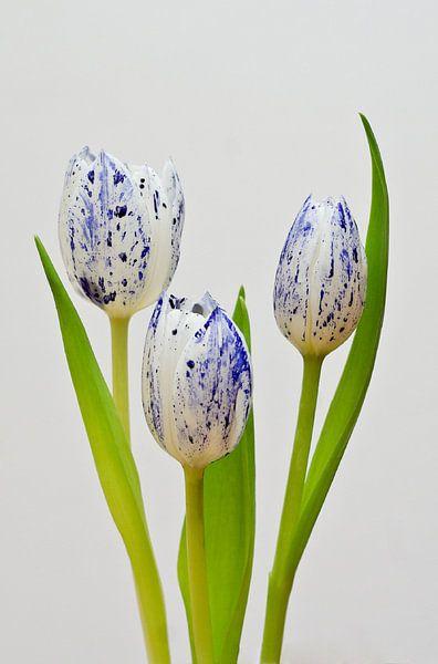 Delfts Blauwe Tulp van Sebastiaan van Venetiën