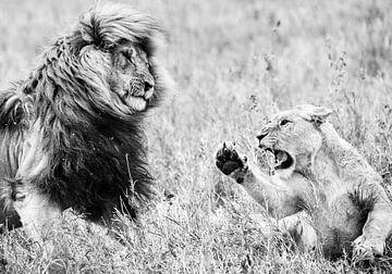 Löwen von Robert Styppa