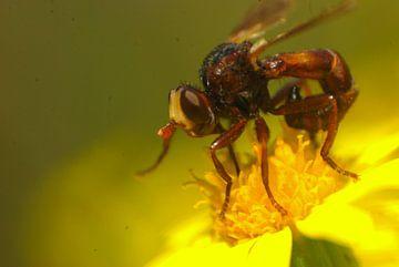 Aus Angst vor der Fliege? von Klaas Dozeman