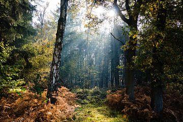 Sonnenstrahl zwischen den Bäumen von Lies Callemeyn