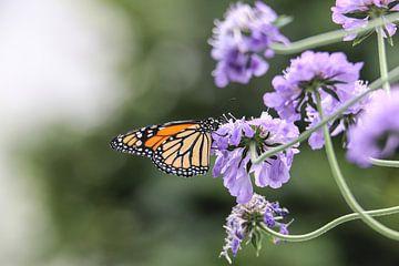Monarch butterfly van