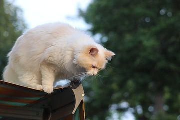 The Cat life van Angelie Montijn