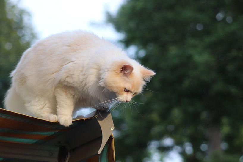 Das Leben der Katze von Fotografiemetangie