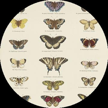 Vlinders,  Ernst Fröhlich