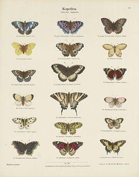 Schmetterlinge, Ernst Fröhlich
