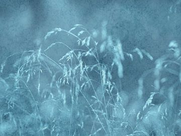 summer wind van Vera Laake