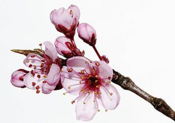 Frühling pur van