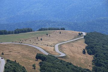 Weg over de heuvels van Hein van Mulligen