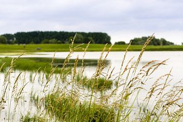 Lekdijk - Gras langs de oever van Tony Buijse