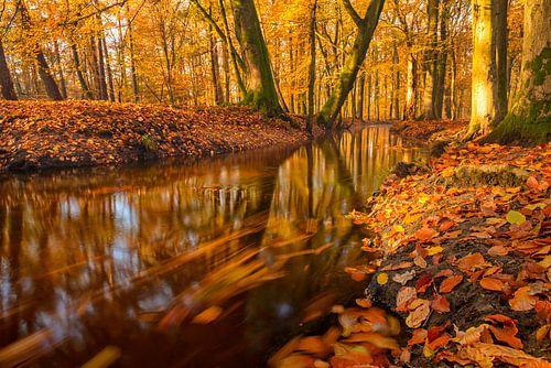 Leuvenumse beek in de herfst