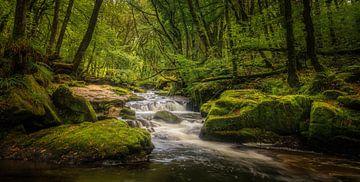 Jungle van Watervallen van Joris Pannemans - Loris Photography