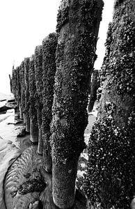 strandpalen-1
