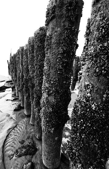 strandpalen-1 van Yvonne Blokland