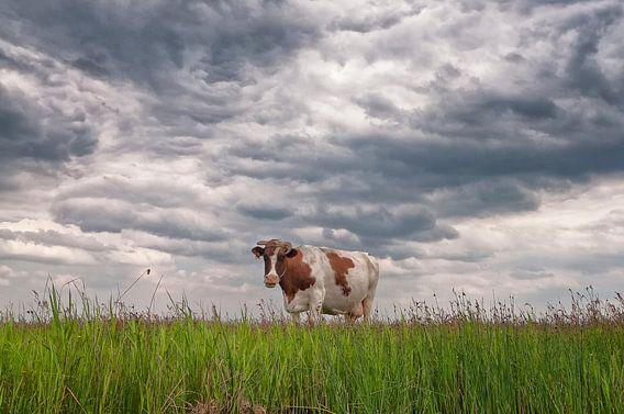 Roodbonte koe in Waterland van Peter Bongers