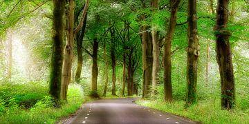 weg door het bos van