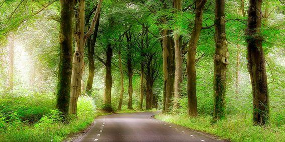 weg door het bos van Rigo Meens