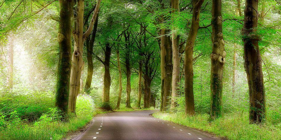 weg door het bos