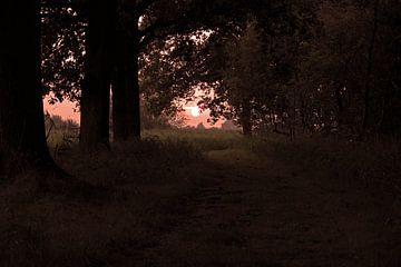 Zonsondergand op bospad. van Frank de Ridder