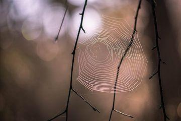 spinnenweb in het bos van Tania Perneel