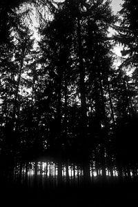 Spookachtig bos van Ilse Photography