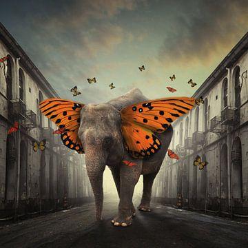 Butterphant, hardibudi sur 1x