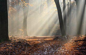 Zonneharpen in het bos van Michel Knikker