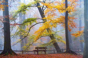 Nehmen Sie Platz und genießen Sie II. von Lars van de Goor