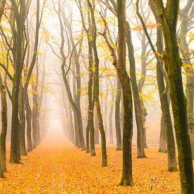 Sentier à travers un paysage de hêtres brumeux sur Sjoerd van der Wal