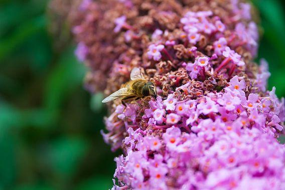 bloemetjes en bijtjes van Bas Nuijten