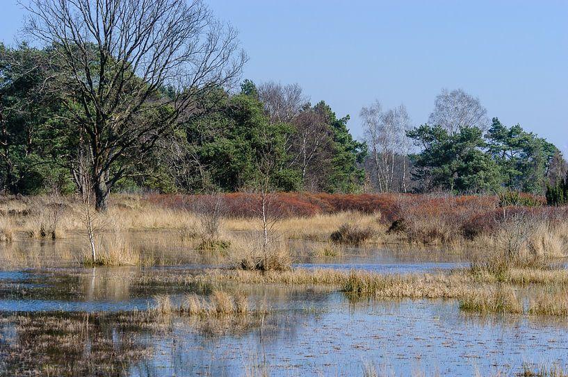 Oortven bij Mekkelhorst in het gebied Stroothuizen, Overijssel, Nederland van Martin Stevens