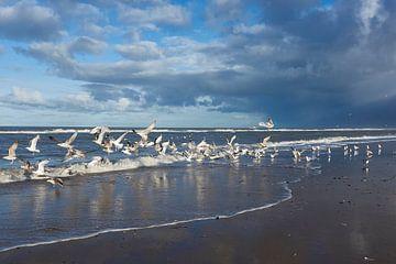 Fris beeld van Noordzee meeuwen op het strand van Geert van Kuyck