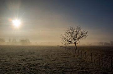 Winterse boom van Sybolt Engelsma