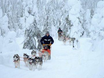 Hundeschlittenfahrt Finnisch-Lappland von Maurice Dawson